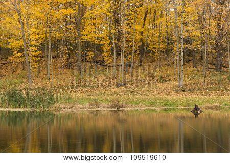 Autumn Trees & Pond