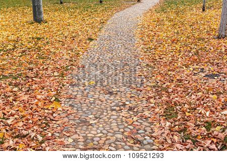 Footpath With Autumn Leaves Fall In The Garden