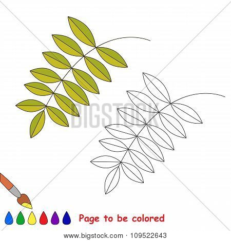 Green ash leaf vector cartoon to be colored.