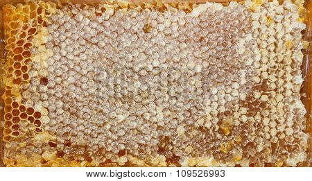 Texture Of Honey