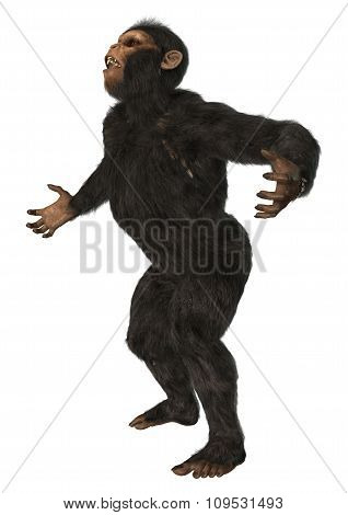 Monkey Chimpanzee On White