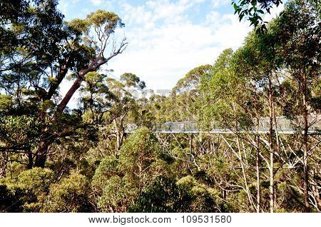 Tree Top Walk: Valley of the Giants Canopy, Western Australia