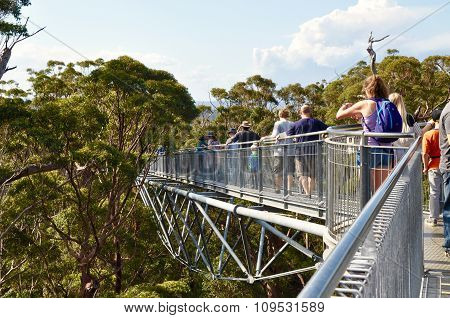 Tree Top Walk Architecture: Valley of the Giants, Western Australia