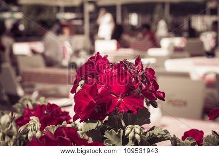 Red Gardenium Flowers