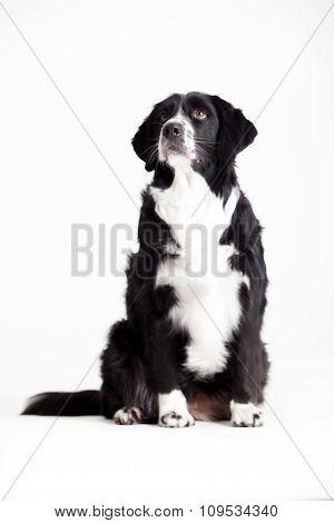 Sweet Dog Is Waiting