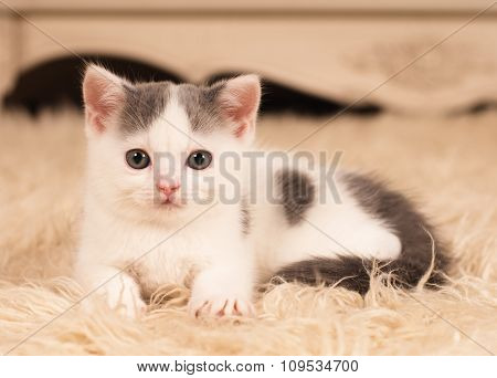 Cute little kitten