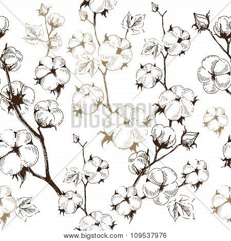 Organic stems of cotton plants on white background