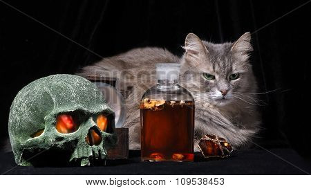 Mystical life with a cat skull, a bottle of dark matter and drakotsennym ring with a glowing stone