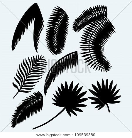 Collection set of palm leaves