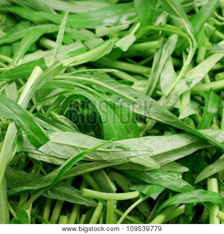 The close up of Chinese morning glory vegetable