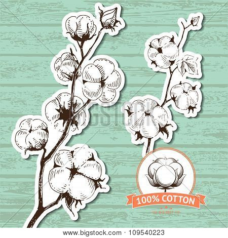 Vector hand drawn stems of cotton plants.