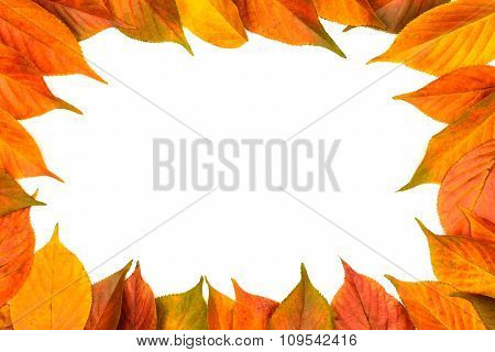 Colorful Frame Of Fallen Autumn Leaves On The White Background