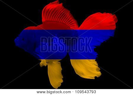 Flag of Armenia on goldfish