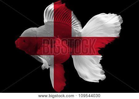 Flag of England on goldfish