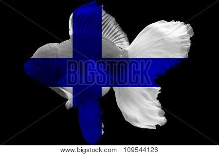 Flag of Finland on goldfish