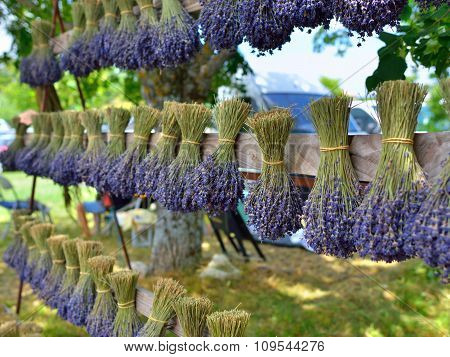 Lavender Flowers, Provence, France