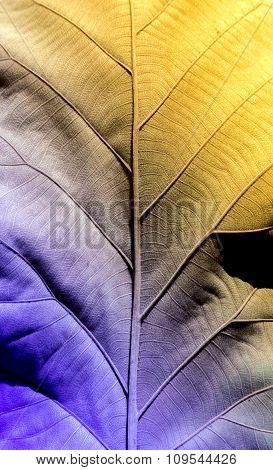 Botany Cell Of Dry Leaf Vintage