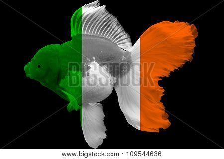 Flag of Ireland on goldfish