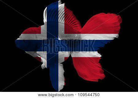 Flag of Norway on goldfish