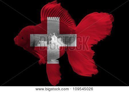 Flag of Switzerland on goldfish