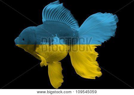 Flag of Ukraine on goldfish