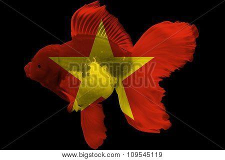 Flag of Vietnam on goldfish