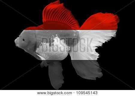 Flag of Yemen on goldfish