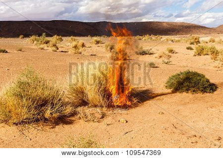 burning Bush grass in the desert