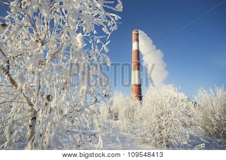 Frost On The Trees And A Pipe Boiler With Departing Smoke.