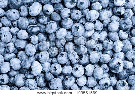 Berries Of Blueberry Background Filtered