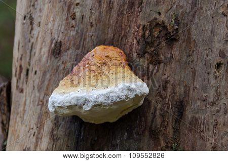 Mushrom On The Tree