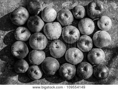 Freshly Picked Apples With Contrasting Shadows On The Old Metal Table Black And White