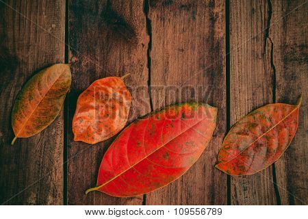 Autumn Background With Colored  Leaves Falling On Grunge Wooden Board.