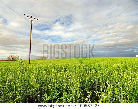 Telephone Mast in Rural Landscape