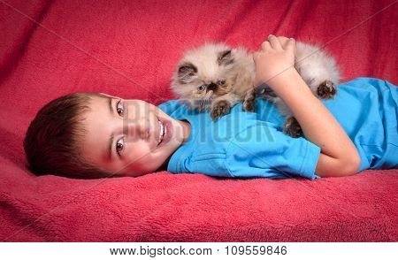 Young Blue Point Himalayan Persian Kitten And Cute Boy