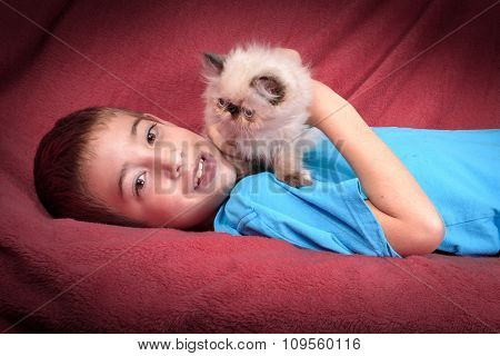 A Young Blue Point Himalayan Persian Kitten