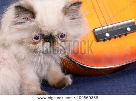 Young Himalayan Persian Kitten With A Guitar