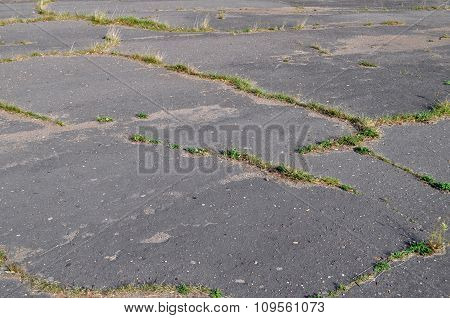 Grass Sprouted Through The Asphalt