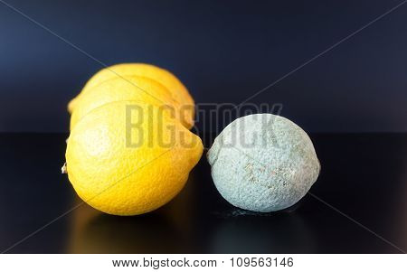 Moldy Lemon Facing Healthy Ones