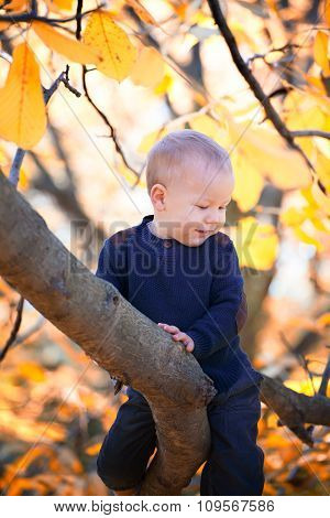 Baby Boy Sitting On A Branch