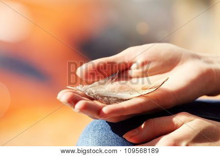 Hands holding a feather on blurred background, close-up