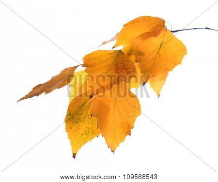 Fall leaves isolated on white