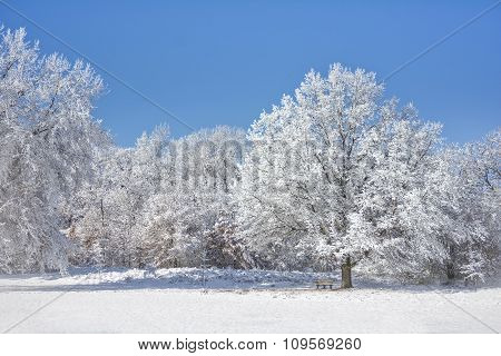 Snowy Winter Trees