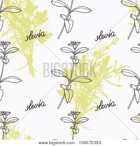 Hand drawn stevia branch and handwritten sign. Spicy herbs seamless pattern. Doodle kitchen backgrou
