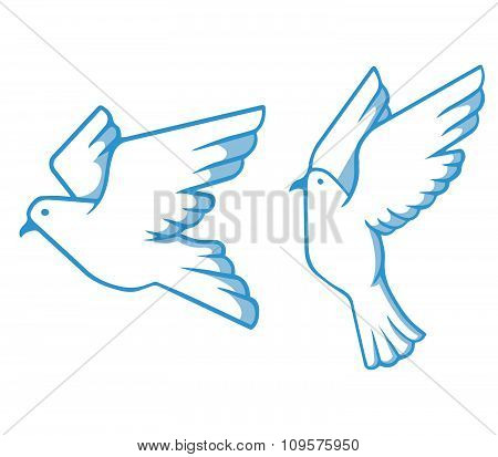 Blue White Pigeon