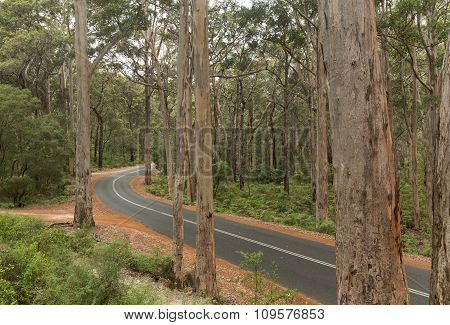 Curved Sealed Road in the Karri Forest