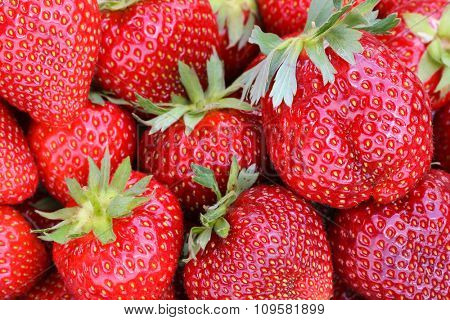 Closeup photo of giant strawberries with stems on them, selective focus