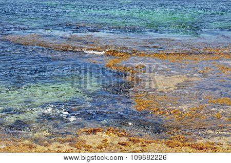 Coastal Reef: Cape Peron, Western Australia