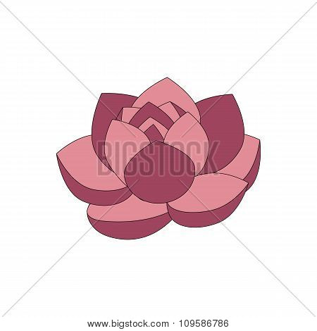Pink beautiful lotus flower isolated on white background