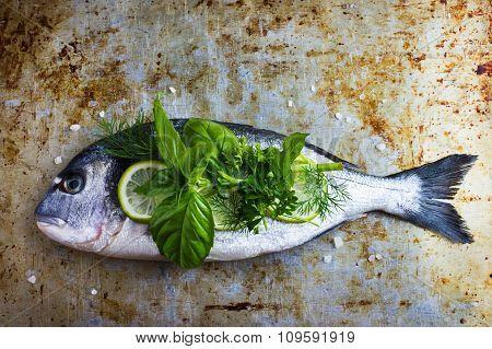 Fresh Raw Dorado Fish With Spicy Herbs